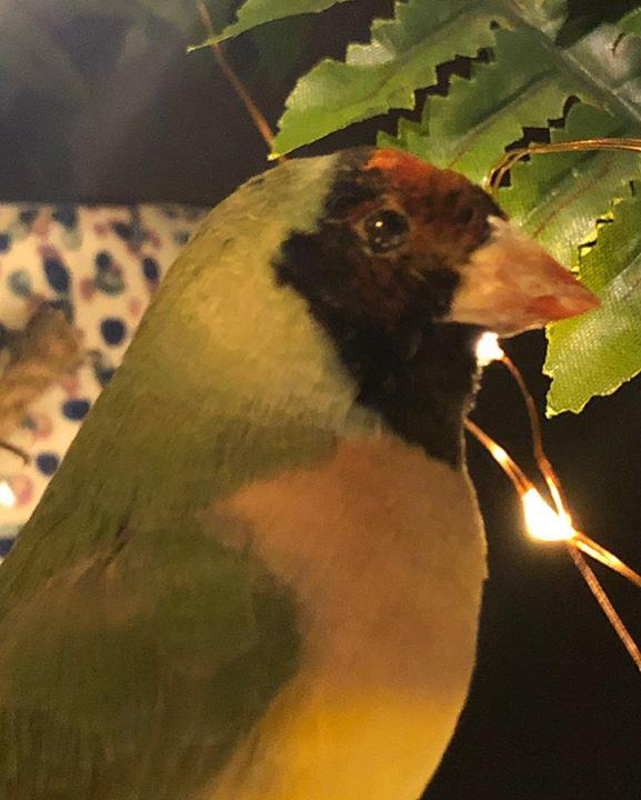 picture of Beak-Bird-Leaf-Eye-Organism-Adaptation-Plant-Perching bird-Finch-33094-54544