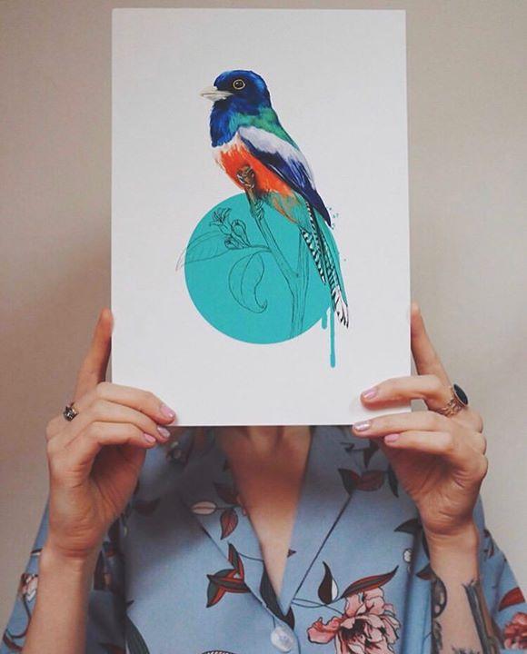 picture of Bird-Bluebird-Illustration-Blue jay-Watercolor paint-Hand-Art-Songbird-Perching bird-32121-43428