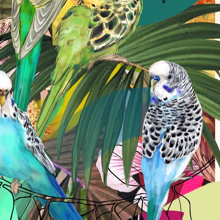 picture of Bird-Budgie-Parakeet-Parrot-Beak-Organism-Macaw-Adaptation-Illustration-1220400698121080