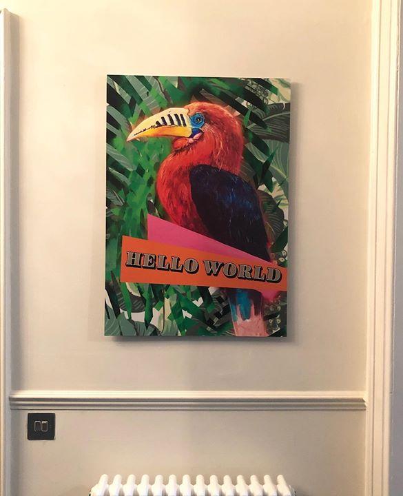 picture of Bird-Hornbill-Beak-Room-Piciformes-Coraciiformes----62017-49539