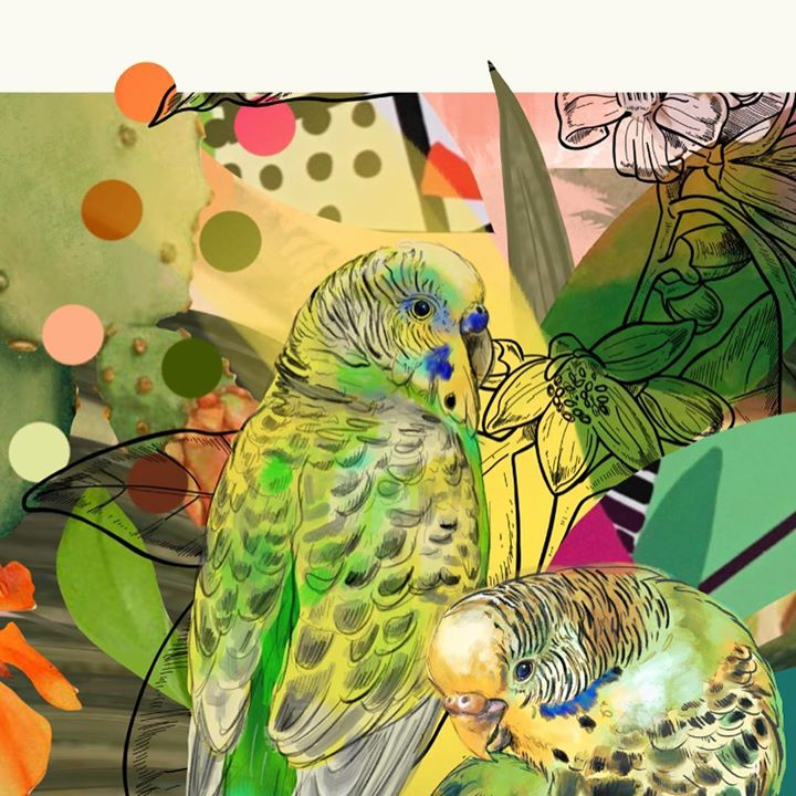 picture of Bird-Parrot-Budgie-Parakeet-Lovebird-Organism-Illustration-Wildlife-Adaptation-1220400698121080