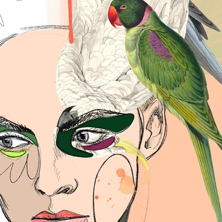 picture of Bird-Parrot-Illustration-Macaw-Parakeet-Feather-Art-Cockatoo-Budgie-1197520927075724