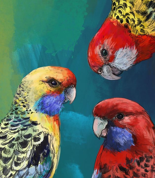 picture of Bird-Vertebrate-Parrot-Beak-Macaw-Parakeet-Adaptation-lorikeet-Budgie-1501463763348104