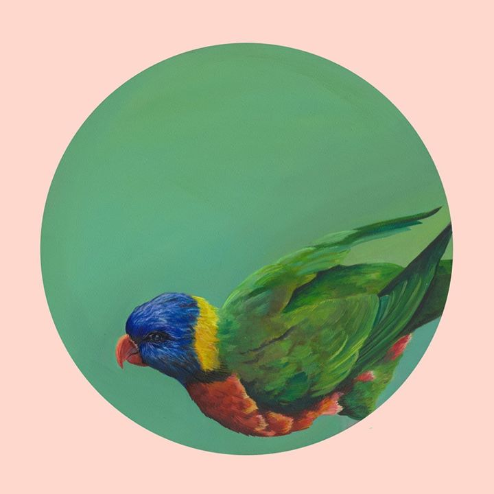 picture of Bird-lorikeet-Green-Parrot-Beak-Lovebird-Plate-Illustration-Parakeet-61422-36695