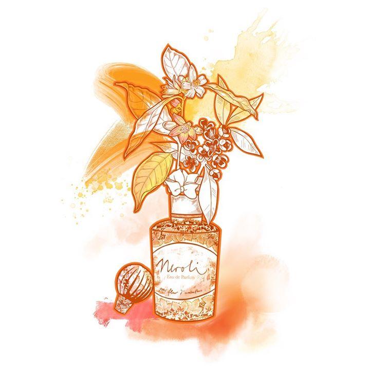 picture of Bottle-Liqueur-Wine bottle-Drink-Liquid-Glass bottle-Plant-Illustration--1569984373162709