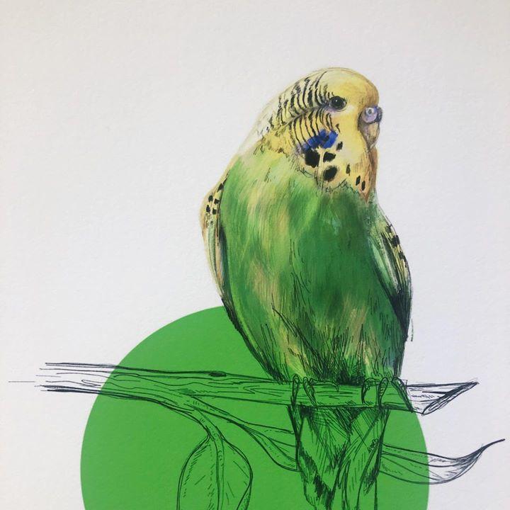 picture of Budgie-Parakeet-Bird-Parrot-Beak-Illustration-Drawing-Sketch-Lovebird-1413641405463674