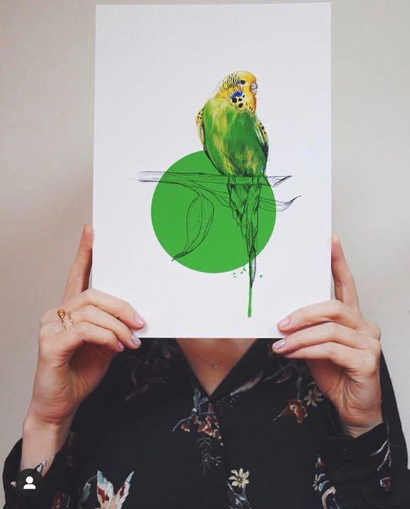 picture of Budgie-Parakeet-Green-Parrot-Bird-Illustration-Hand-Lovebird-Gesture-1461452587349222