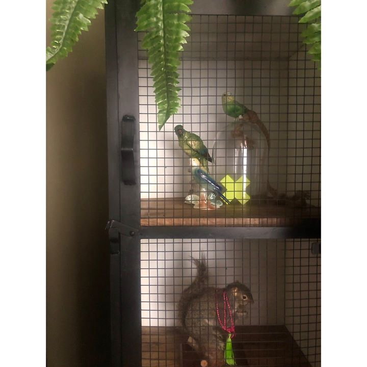 picture of Cage-Parakeet-Parrot-Bird-Budgie-Lovebird-Macaw-Pet supply-Plant-24084-57520