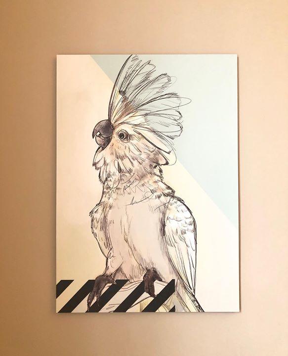picture of Drawing-Bird-Illustration-Sketch-Cockatoo-Art-Parrot-Ink-Cockatiel-62017-46425