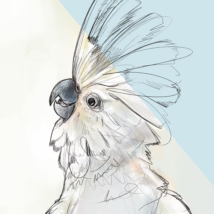 picture of Drawing-Sketch-Wing-Illustration-Bird-Cockatoo-Cockatiel-Beak-Feather-1287632391397910