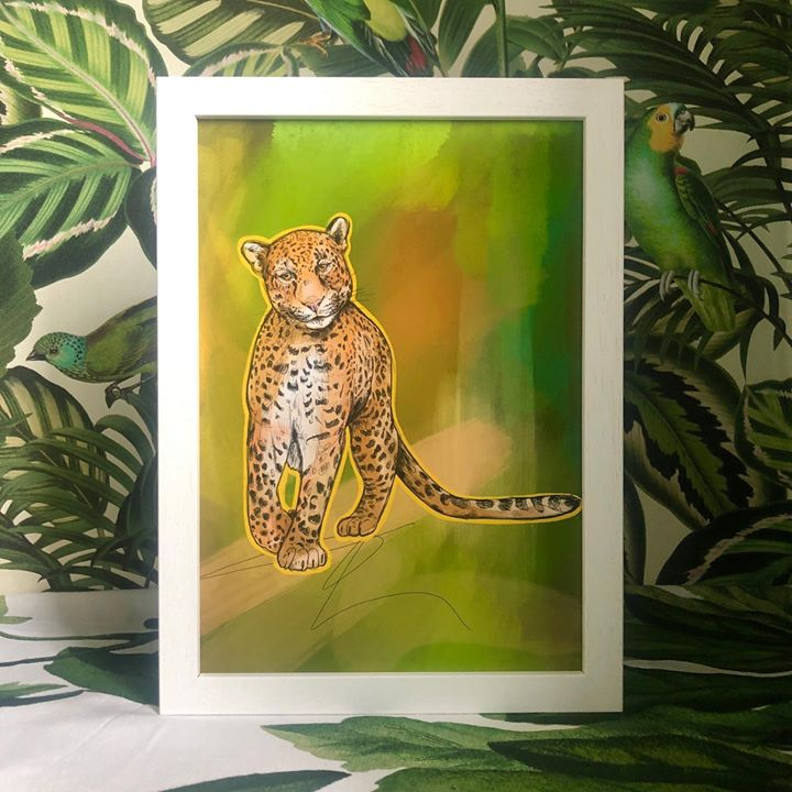 picture of Felidae-Wildlife-Ocelot-Terrestrial animal-Carnivore-Small to medium-sized cats-Leopard-Organism-Wild cat-33243-88886