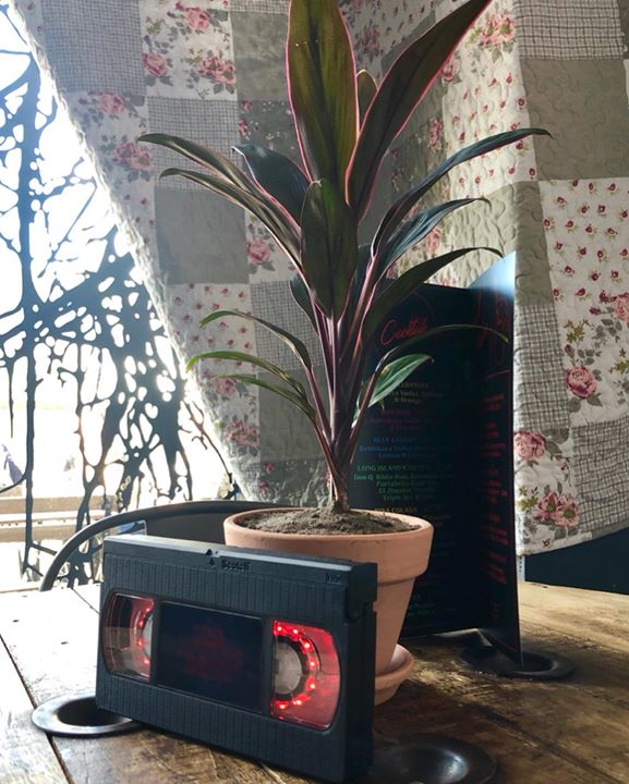 picture of Houseplant-Tree-Plant-Leaf-Technology-Flowerpot-Electronic device-Flower-Furniture-1257770597717423