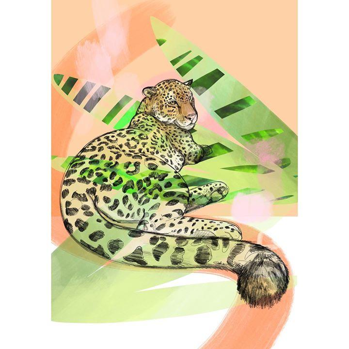 picture of Jaguar-Felidae-Leopard-Wildlife-African leopard-Big cats-Terrestrial animal-Carnivore--25054-71535