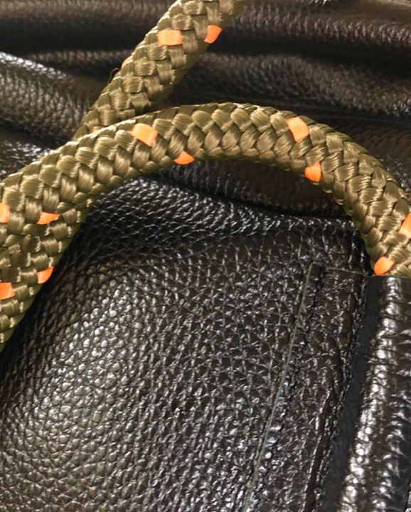 picture of Kingsnake-Snake-Colubridae-Scaled reptile-Reptile-Elapidae-Serpent---1216724435155373