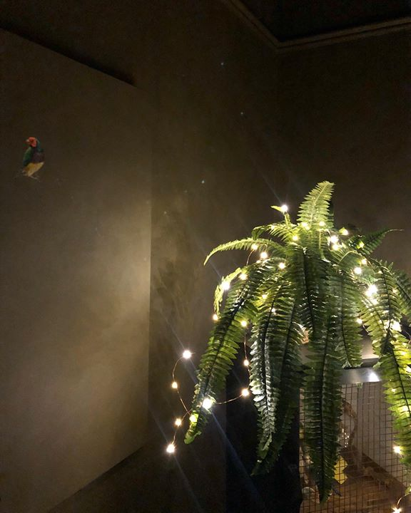 picture of Light-Tree-Lighting-Night-Ceiling-Sky-Architecture-Leaf-Palm tree-1433401316821016