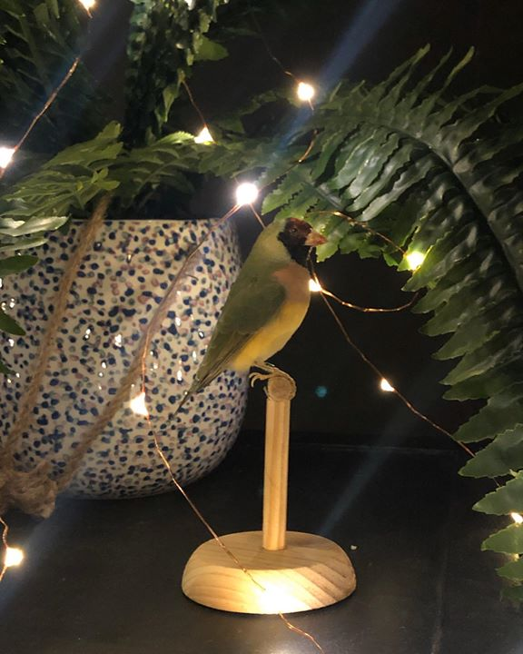 picture of Lighting-Tree-Plant-Palm tree-Feather-Night-Lighting accessory-Arecales-Metal-1433401316821016