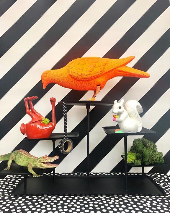 picture of Orange-Bird-Illustration-Parrot-Art-Perching bird----1214377862056697