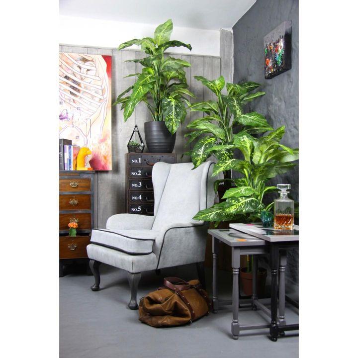 picture of Plant-Property-Building-Furniture-Houseplant-Comfort-Interior design-Flowerpot-Floor-1823075601186917