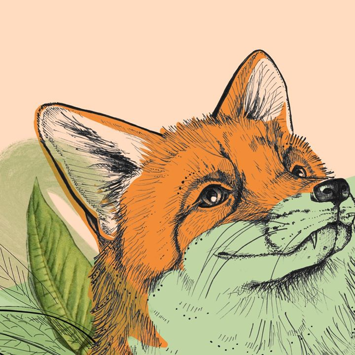 picture of Red fox-Mammal-Fox-Canidae-Illustration-Swift fox-Wildlife-Whiskers-Drawing-1294853984009084