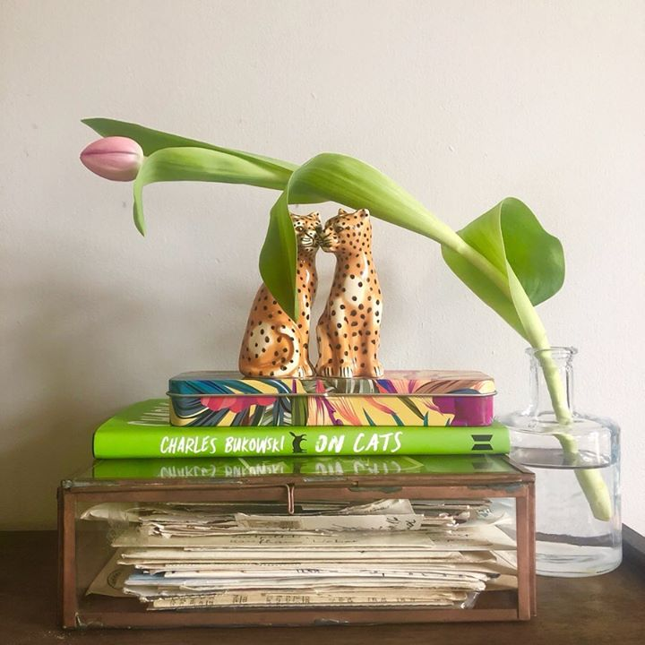 picture of Shelf-Plant-Flower-Furniture-Houseplant-Table-Flowerpot-Room-Nepenthes-1234864463341370