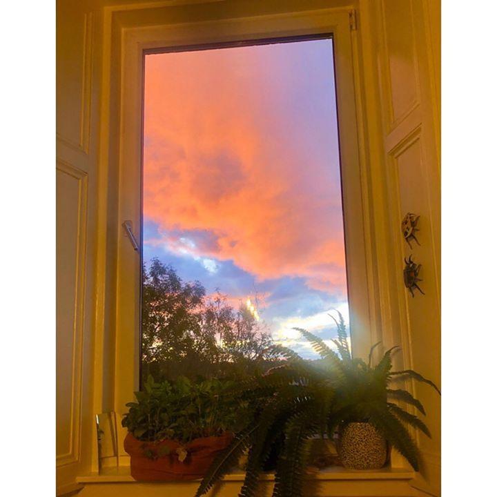 picture of Sky-Orange-Yellow-Window-Tree-Painting-Leaf-Sunrise-Sunlight-33315-52968
